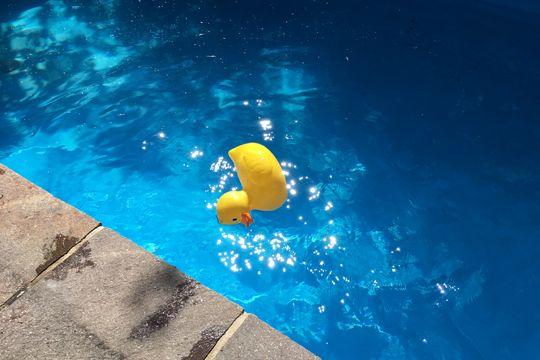 Baden In Nürnberg Swimming Pool Wasser Gummiente Ente Schwimmbecken