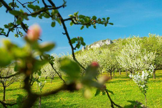 Oster-Tipps Nürnberg Kirschblüte Fränkische Schweiz