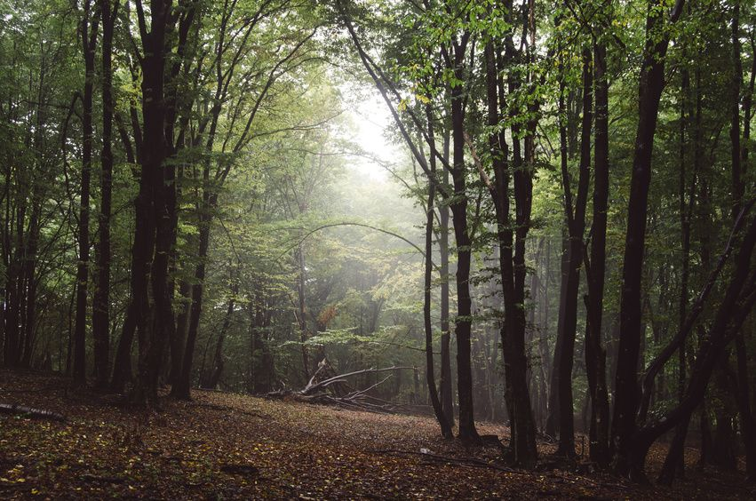 light in a forest in autumn