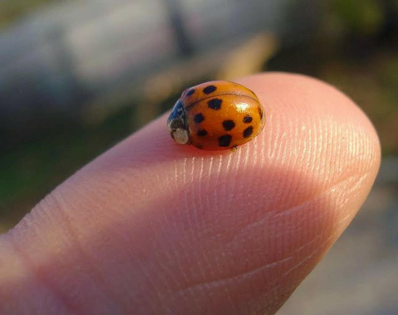 ladybug-268364_1280