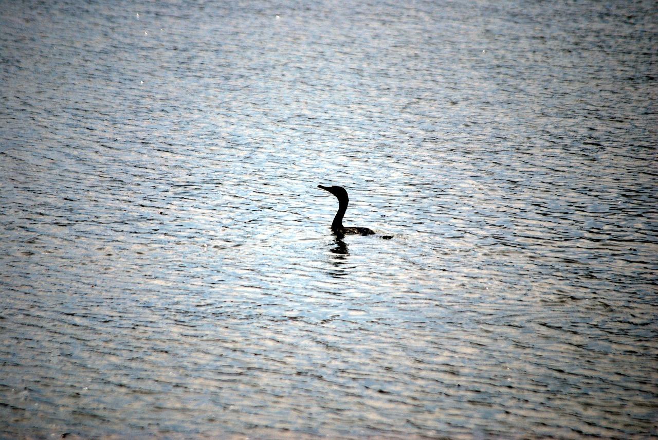 Start-ups Ente See Wasser