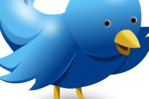 Twitter Einsteiger Tipps Vogel