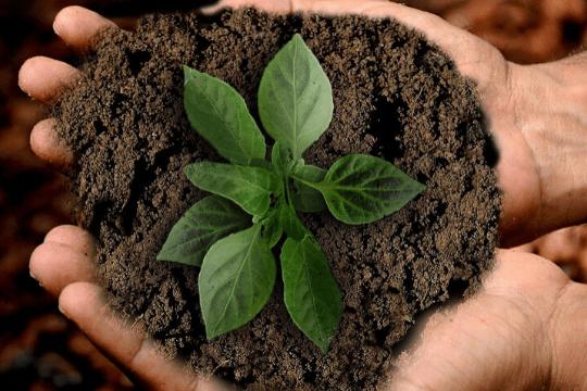 CSR für das Employer Branding, Erde